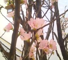 早咲き.JPG